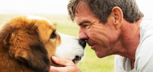 """""""4 vidas de um cachorro"""" chega aos cinemas brasileiros na semana que vem."""