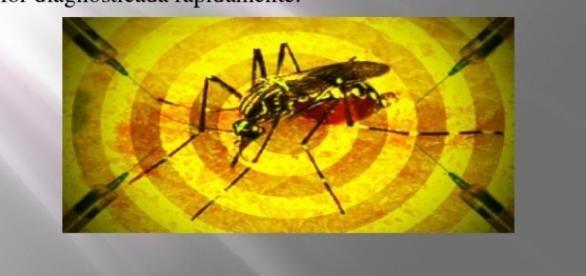 Febre amarela: surto atinge regiões do Brasil