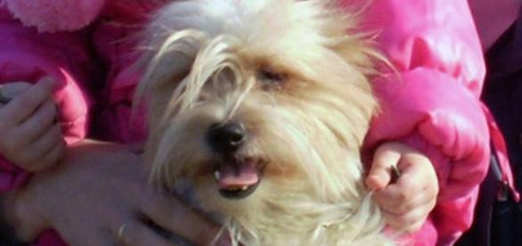 Tori, a cadela abandonada à entrada do aeroporto.
