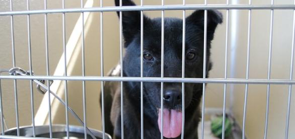 Credit Human Society Tampa Bay. Harriet has been rescued from a dog meat farm in South Korea.