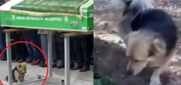 Dono de cãozinho morre e, anos depois, animal visita túmulo (Imagens: Google)