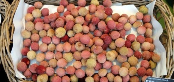 Lichia, uma fruta encontrada nas regiões mais quentes da Ásia
