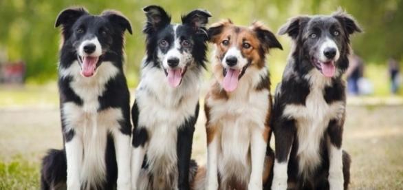 Impfungen beim Haustier behandelt