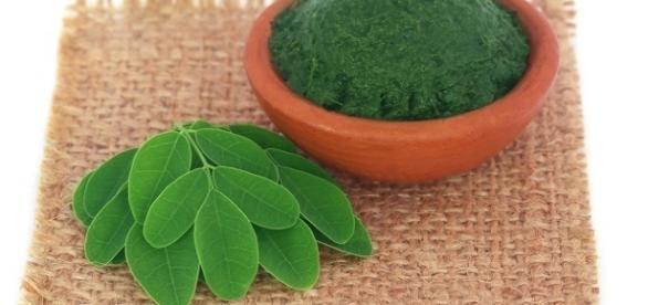 De acordo com especialistas, a moringa é uma fonte de vitaminas e sais minerais.