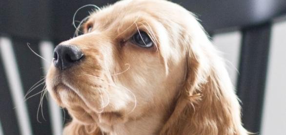 Pies jest naszym przyjacielem, więc traktujmy go jak przyjaciela (fot. CAMMY-Blog)