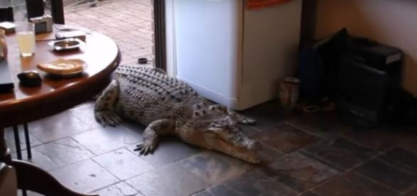 4 exotic animals - pets. [Image Credit:Vicki Lowing/YouTube]