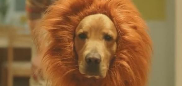 Will you be dressing up your pet this Halloween? [Image via Danio's232/YouTube]