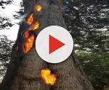 Fogo no interior de árvore não afeta a parte externa. Fenômeno intriga internautas e repercute na imprensa. (Matty Mcdermott)