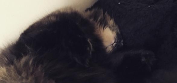 My cat Floofer sleeping next to me - pic: Maria Micu