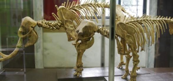 Che vuol dire in Geologia: Elefante Nano - blogspot.com
