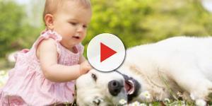 Tener un perro en casa reduce el riesgo de eccema y de asma