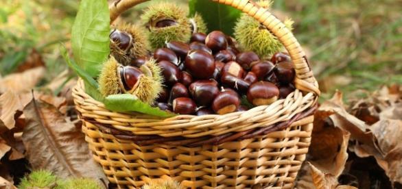 autunno è tempo di castagne, edo blog-1650 1152