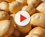 Aglomeración de patatas al sol