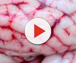El estudio de células de cerebro humano aportará información valiosa para tratar enfermedades cerebrales