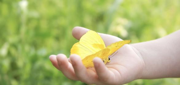 La mano di un bambino ed una farfalla gialla
