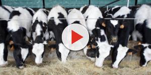La carne: un debate sobre nuestro planeta