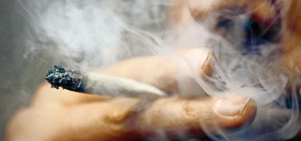 Kiffen erlaubt?: Jamaika-Koalition könnte Cannabis legalisieren ... - stuttgarter-zeitung.de