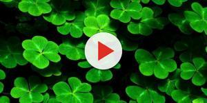 A magia dos trevos de quatro folhas pode ser benéfica para as pessoas do signo de Touro