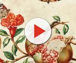 María Sibylla Merian y su admiración los insectos