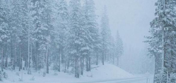 Mammoth calls out the plows as first snow of the season coats ... - latimes.com