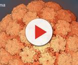 Ricostruzione atomica del Papilloma Virus Umano (HPV)