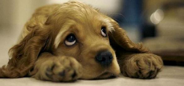 Ter um cachorro ajuda a prevenir várias doenças e lhe dá mais anos de vida. (Reprodução/Web)