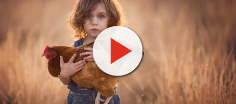 Child with a Turkey for Thanksgiving, Flickr