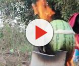 Mastanamma cooking her famous Watermelon Chicken. [Image Credit: Country Foods/YouTube]