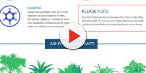 Plantas purificadoras del aire según la NASA