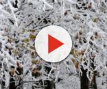 Notizie di neve - IVG.it - Le notizie dalla provincia di Savona - ivg.it
