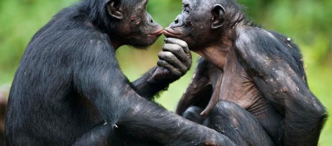 Los mejores libros que nos acercan a los primates