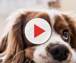 Cani dalle doti magiche: individuano i tumori prima dell'uomo