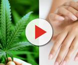 Cannabis oil based skincare. Image Credit: Blasting News