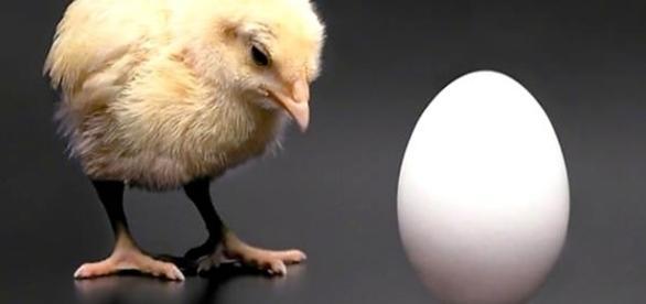 Já se perguntou quem surgiu primeiro, se o ovo ou a galinha?