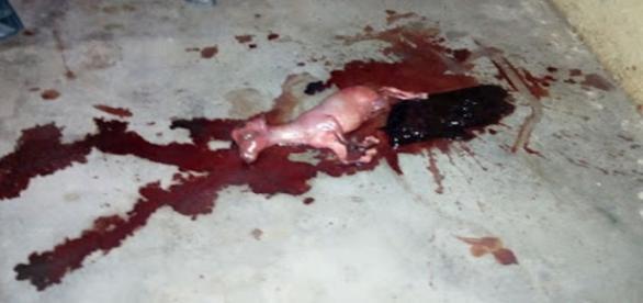 Pessoas ficaram assustadas com nascimento do animal (Nigeria Today)