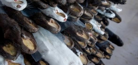 Minks raised to produce furs in China | Hong Kong Photographer ... - photoshelter.com