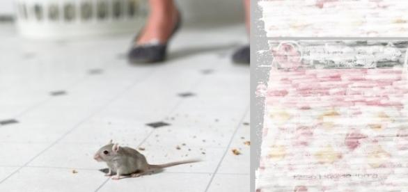 Empresa que fabrica biscoito nacionalmente conhecido foi condenada a pagar indenização por fezes de rato
