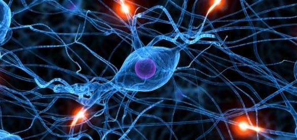 Pode a neurociência explicar definitivamente quem é o ser humano? http://razaoemquestao.blogspot.com.br