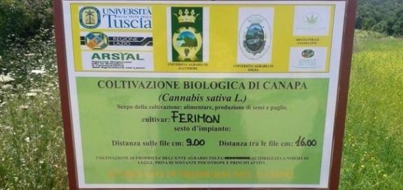 La Regione Lazio approva una legge che consente la coltivazione della cannabis sativa