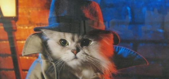 Los gatos que usó la CIA como espías | Historias de nuestra Historia - hdnh.es