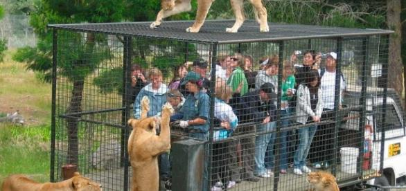 Imagens reais do Lehe Ledu Wildlife Zoo, na China