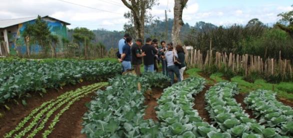 La restauración de suelos agrícolas: clave para combatir el cambio.