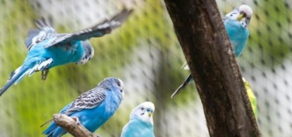 Schnabel sucht Schnäblin: Papageien sind sehr soziale Tiere - Elbe ... - ejz.de