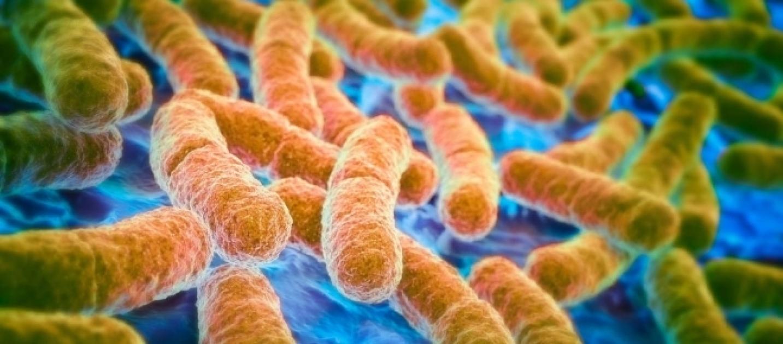 e coli bakterien im darm