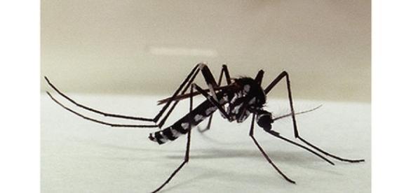Atenção: É preciso realizar exames laboratoriais para se ter certeza do diagnóstico, já que sintomas da febre amarela são semelhantes aos da dengue