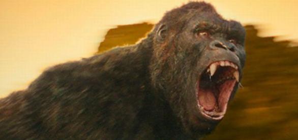 Kong: A Ilha da Caveira - Filme 2017 - AdoroCinema - adorocinema.com divulgação