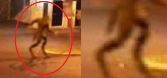 Lobisomem é caçado no MS e olha o que aparece no meio da rua; vídeo