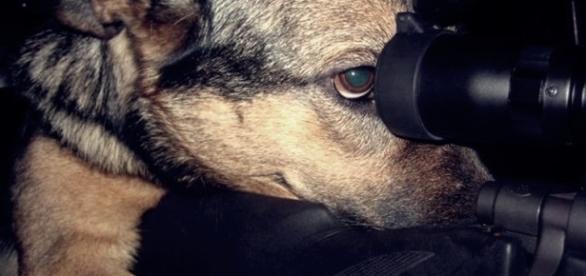 Cachorro é acusado de atirar na namorada do seu dono com uma arma