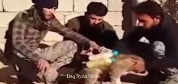 """Ultima invenție diabolică a jihadiștilor Statului Islamic: """"cățelul sinucigaș"""" - Foto: captură YouTube"""