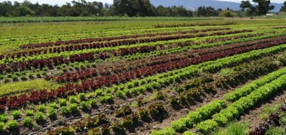 Green Savers – Agricultura biológica beneficia a biodiversidade - sapo.pt